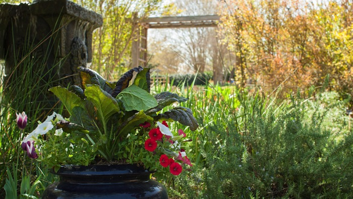 The Sacred Garden. Photo courtesy of San Antonio Water System / GardenStyleSA.com.