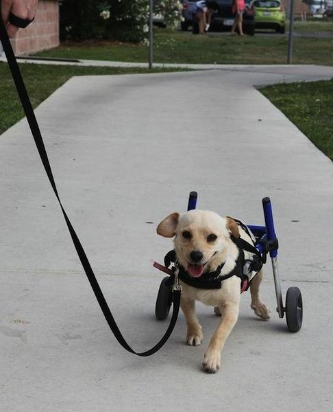 A happy Chance on his adoption day. Photo courtesy of SAPA!