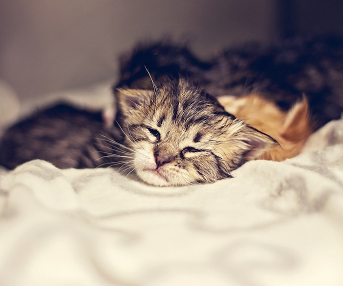 Kittens nursed back to health by SAPA!. Courtesy photo.