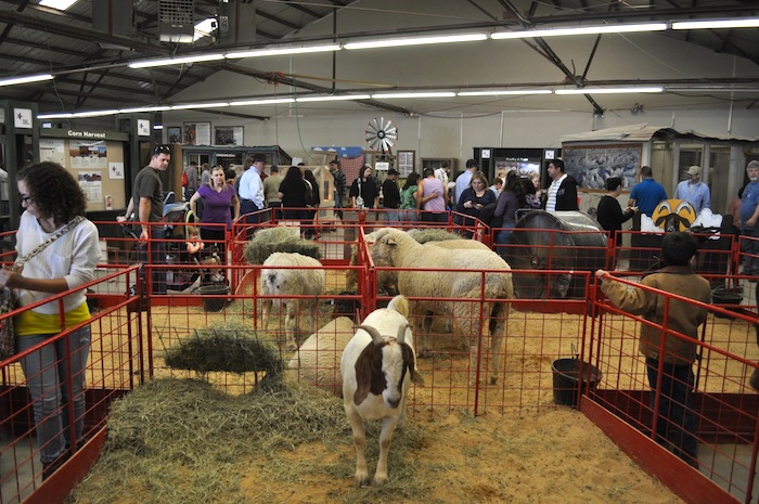 Inside the petting zoo during the 2013 San Antonio Stock Show and Rodeo. Photo by Iris Dimmick.