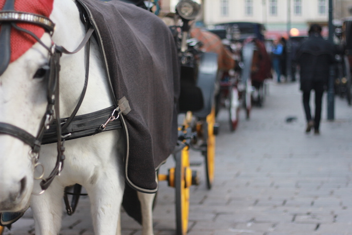 A horse and carriage on the street in downtown Vienna, Austria. Photo by Joan Vinson.