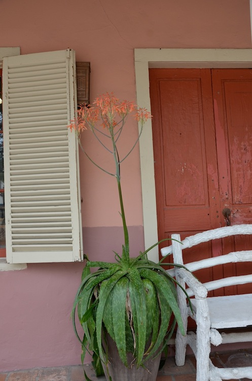 A potted plant decorates the outside of the Equinox Gallery. Photo by Gretchen Greer.