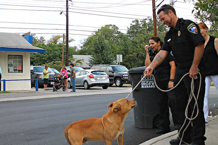 Joint walks with community members, ACS, volunteers and Councilmember Shirley Gonzales (D5) to helping reduce the number of loose animals in District 5. Photo by Sean Encino.