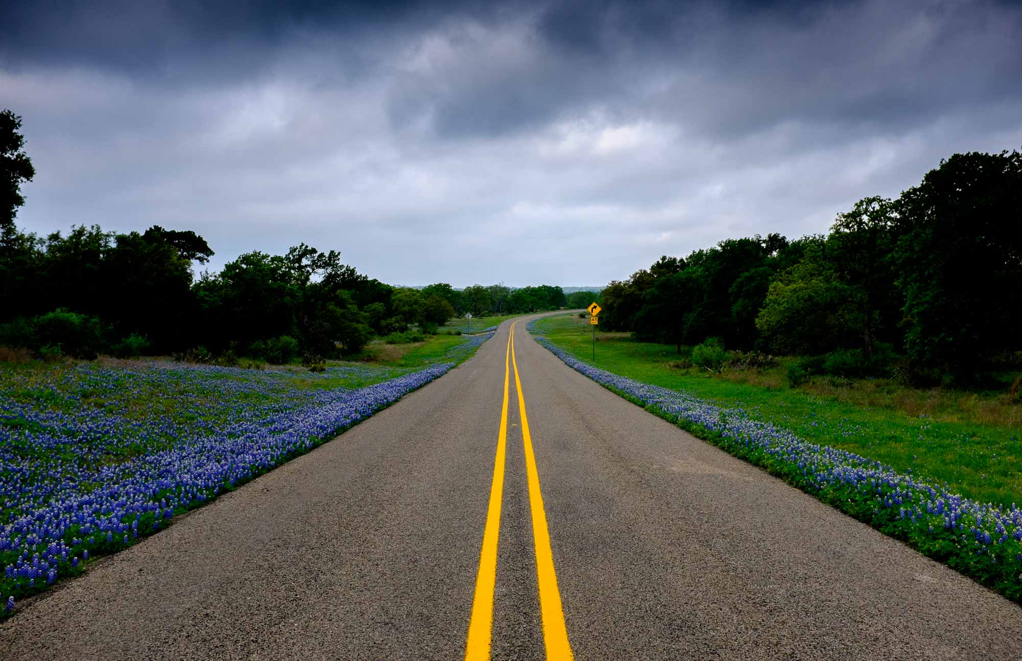 Bluebonnets along side Farm Road 1323 the Texas Hill Country Trail. Photo by Scott Ball.