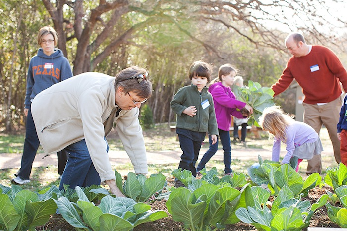 Linda Hallstead works with children in the cabbage bed. Photo by Rachel Chaney.