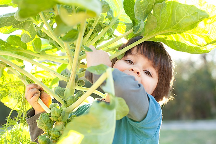 A boy harvests brussels sprouts. Photo by Rachel Chaney.