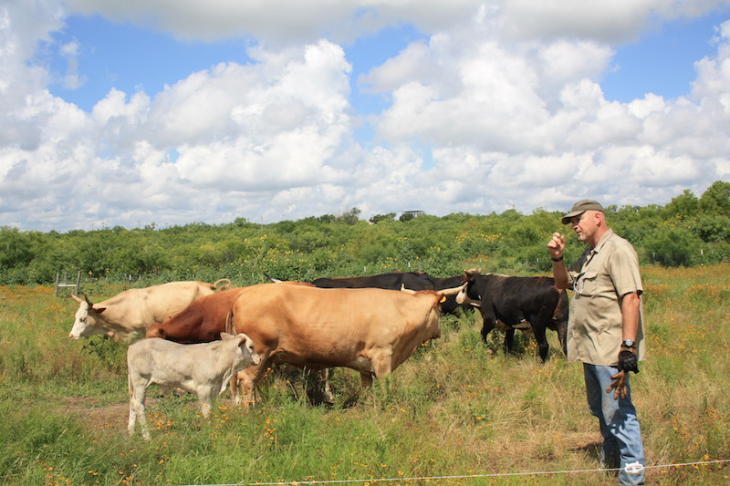 Cattle and farmers from Mesquite Field Farm pose earlier this year. Photo courtesy of Doug Havemann.