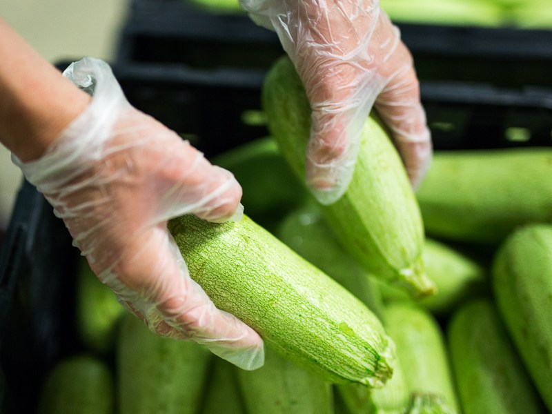A volunteer grabs green squash for donation. Photo by Scott Ball.