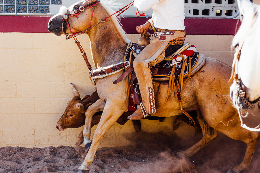 A charro rides along side of a bull during the Colas en el Lienzo event. Photo by Scott Ball.