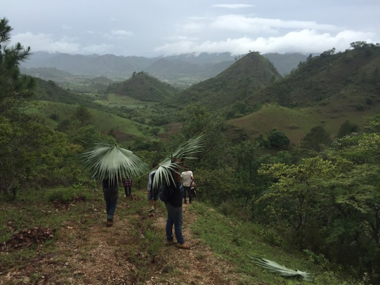 Using Palm fronds as improvised umbrellas as we hiked back to town from the caves. Photo by Everett Redus.