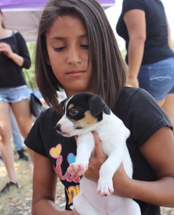 San Antonio Pets Alive! hosted a pet adoption at Raspa Fest. Photo by Kay Richter.