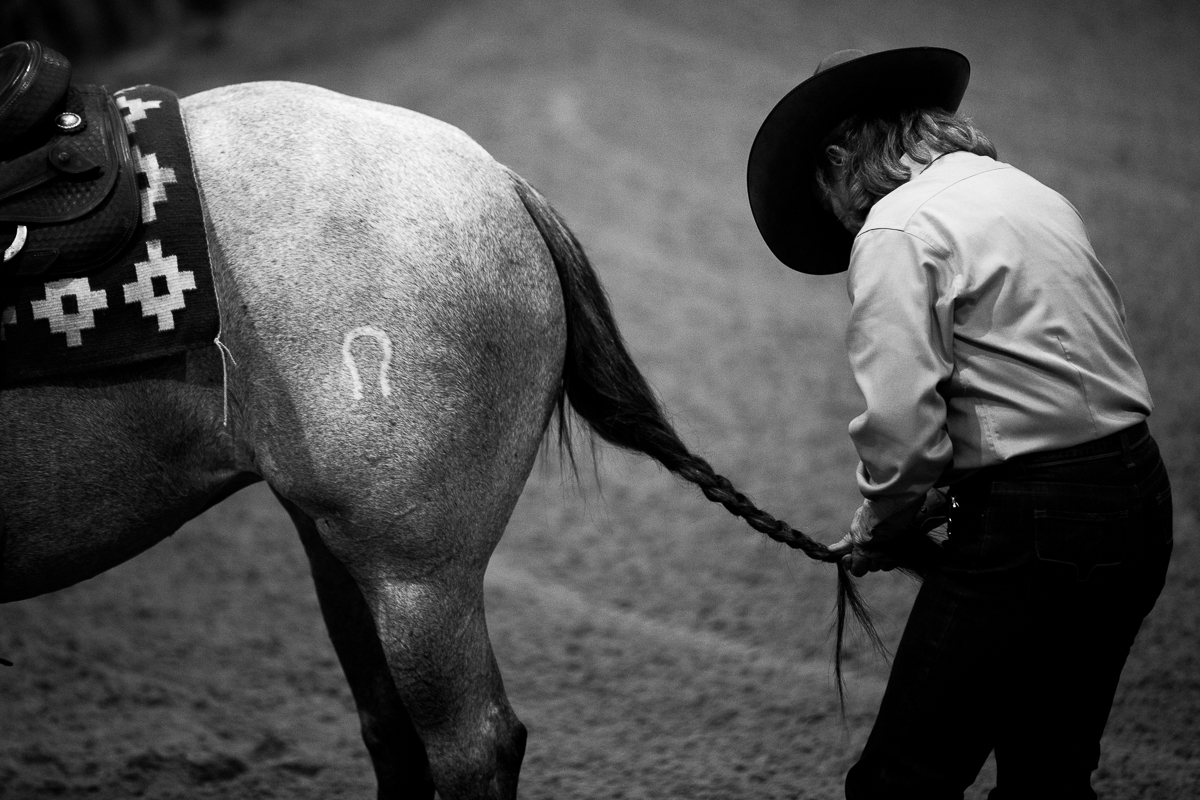 Lindy Burch braids her horse, Adelle's tail hair before she competes for the first time this weekend. Photo by Scott Ball.