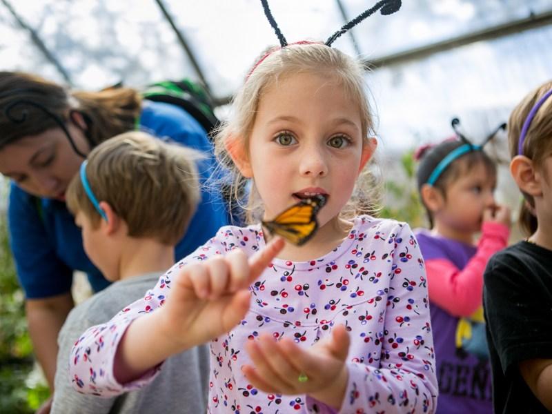 The Monarch butterfly population has tripled since last year. Photo by Kathryn Boyd-Batstone