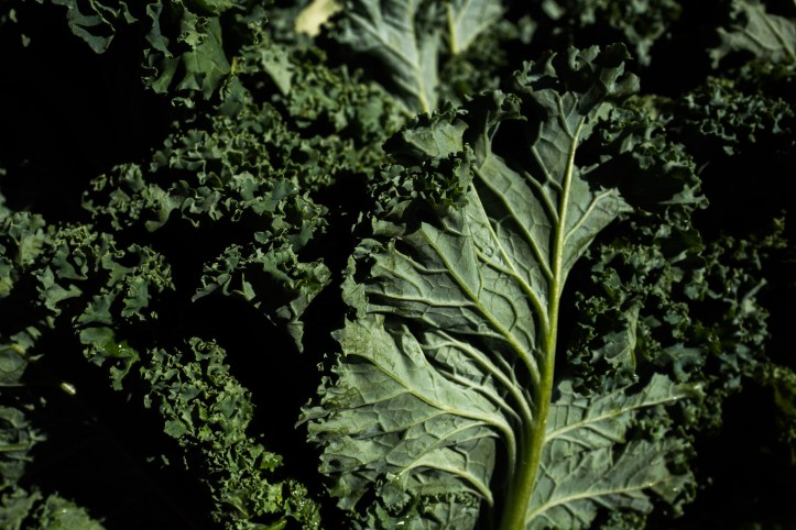 Kale supplied by 9-1 Produce from Devine Texas. Photo by Scott Ball.