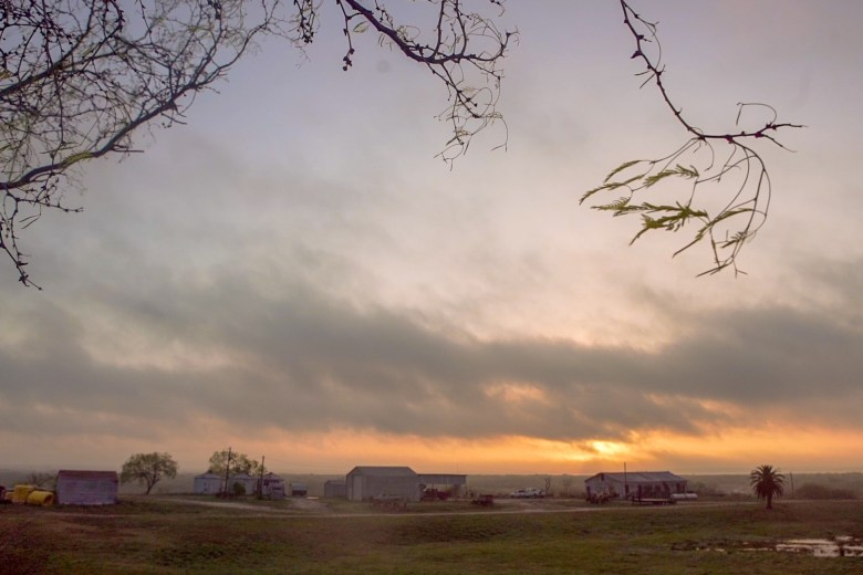 The Peaceful Pork farm is tucked away in Beevile just 100 miles south of San Antonio. Photo by Kathryn Boyd-Batstone