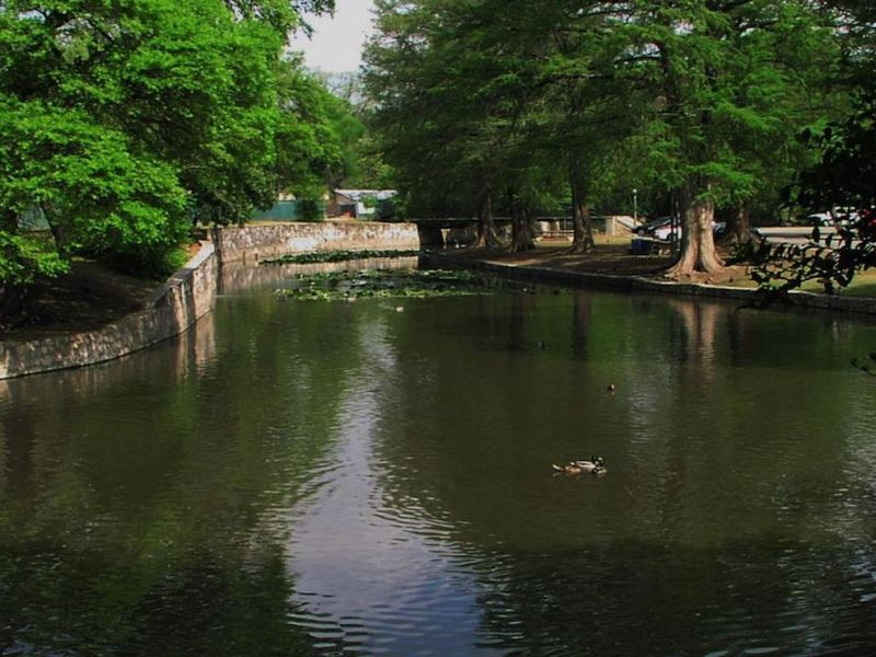 A turtle swims in the San Antonio River. Image courtesy of Stephen Kale.