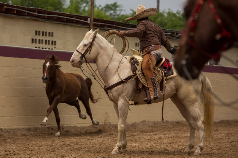A horse stampedes through the chute as a charro attempts to rope the hind leg. Photo by Scott Ball.