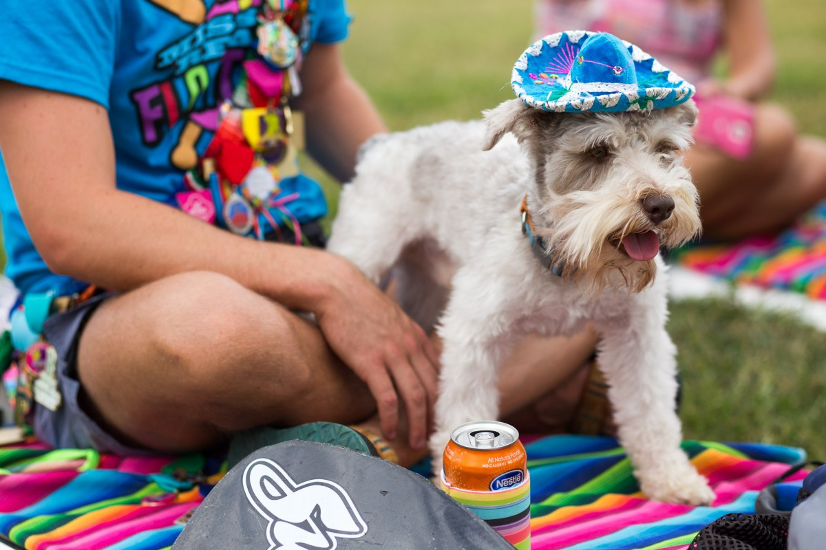 Contestants Nathan Young and Ruben Gonzalez's dog Hooch stands onto of a fiesta themed paddle board. Photo by Scott Ball.