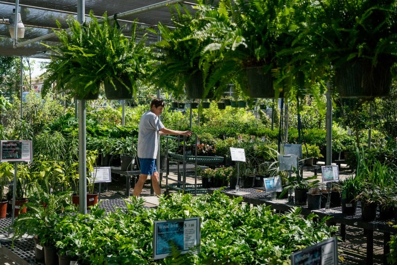 Schulz Nursery has been growing plants for San Antonio for more than five decades. Photo by Kathryn Boyd-Batstone