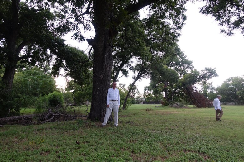 """Richardson """"Dick"""" Gill, vice chair of the Alamo Colleges Citizens Advisory Commmittee, stands next to a heritage pecan tree he wants preserved as Alamo Colleges designs a new headquarters campus at the former Playland Park site. Photo by Robert Rivard"""