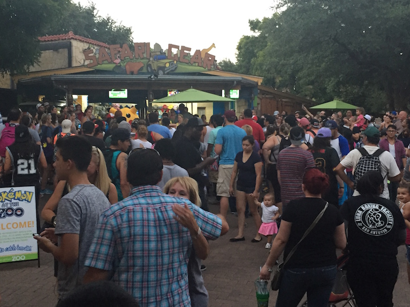 Thousands of visitors attend the Pokémon Go event at the San Antonio Zoo on Friday, July 22, 2016. Photo courtesy of the San Antonio Zoo.