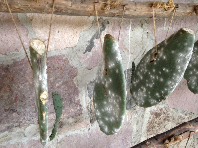 Cactus leaves hang on strings along the stone wall, covered in living cochineal bugs. Photo by Kimberly Suta.