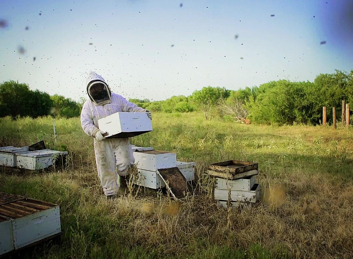 David Holdman of Holdman Honey works on collecting honey in 90 degree weather. Photo by Kathryn Boyd-Batstone.