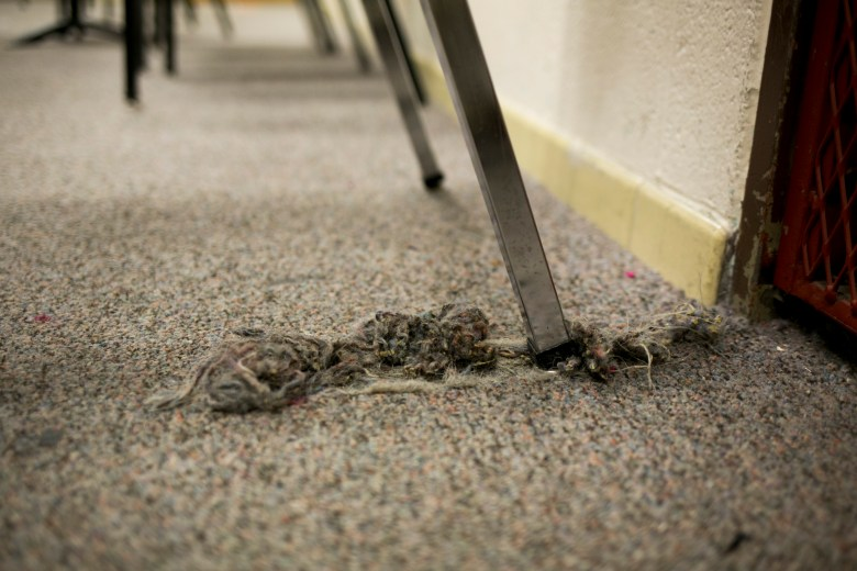 The carpet in the band room at Tafolla Middle School is ripped and stained. Photo by Kathryn Boyd-Batstone.
