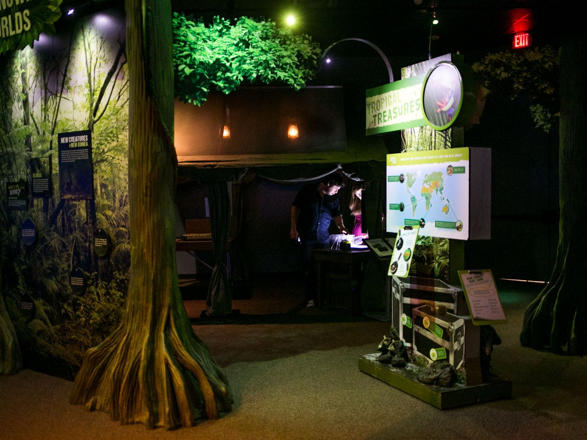 The exhibit features the findings of scientists who have explored New Guinea. Photo by Kathryn Boyd-Batstone.