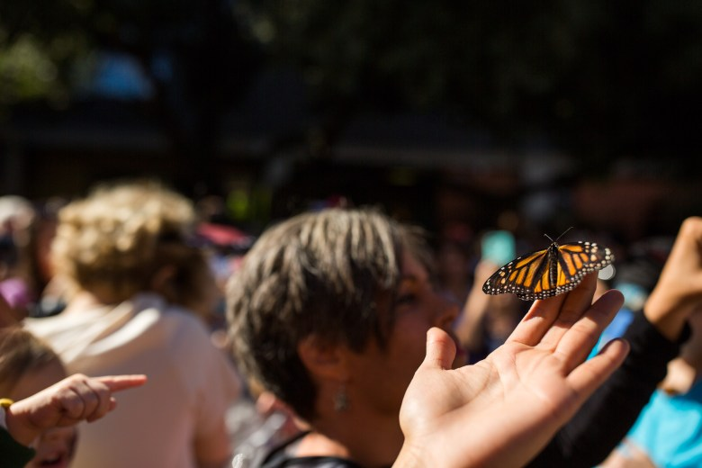 A hand holds a butterfly as it bathes in the sun.