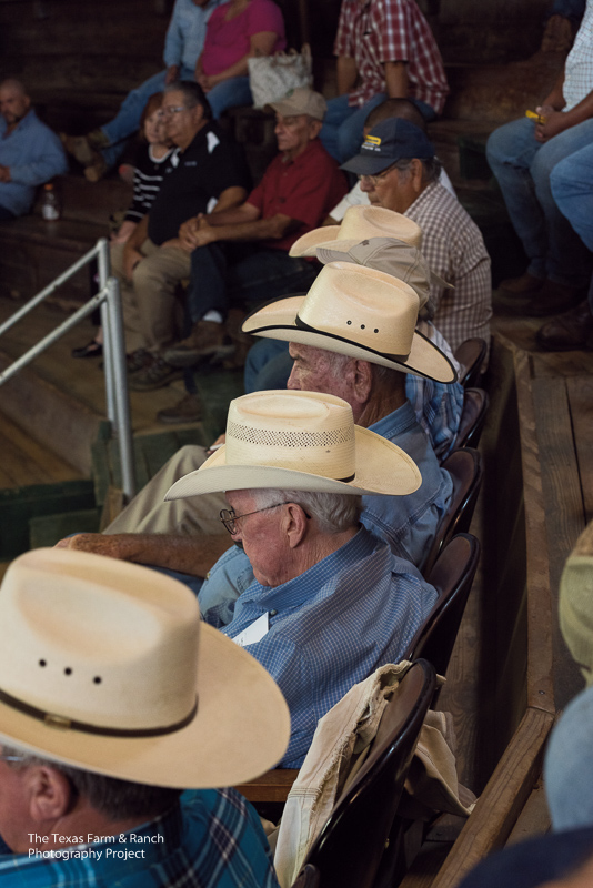 Men in cowboy hats watch a livestock auction in Alice, Texas.