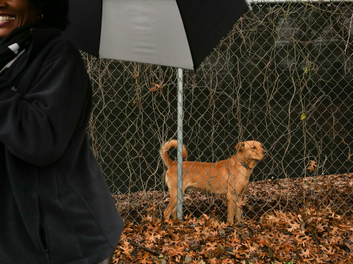 Rhea Howard smiles at passing marchers as a dog observes the crowd.