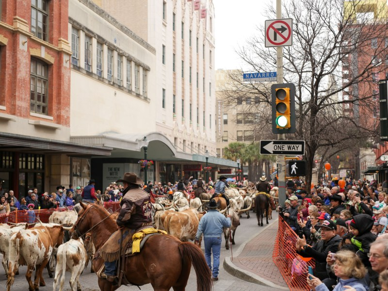 Over one hundred head of cattle consisting mostly of longhorns make their way down Houston Street to Alamo Plaza.