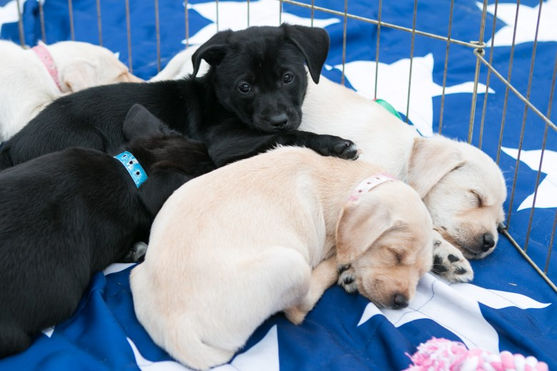 Missy's Haven Canine Rescue brought dogs to adopt at the 5th Annual Bark in the Park – Perrito Grito in Rosedale Park.