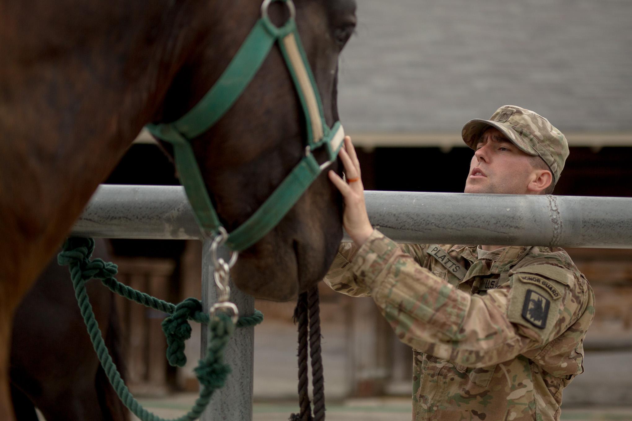 Staff Sergeant Platts gently calms a Caisson horse.