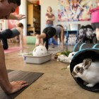 Griffon Smith smiles at the bunnies during a session of bunny yoga at Mobile Om Base Studio.