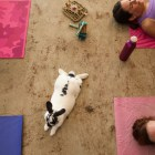 Yogis practice a session of bunny yoga at Mobile Om Base Studio.