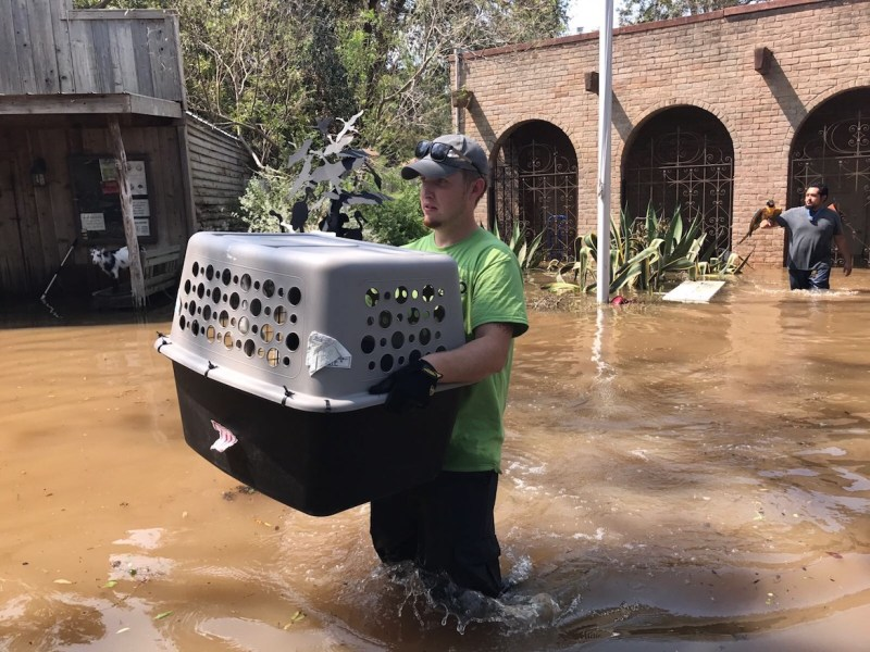 Chase O'Brien of San Antonio Zoo assists in the evacuation of animals at The Texas Zoo.