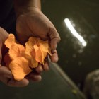 Ana Fernandez prepares to place imitation marigold petals on the Floating Day of the Dead Altar.