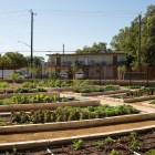 The Culinary Garden at San Antonio Botanical Garden.