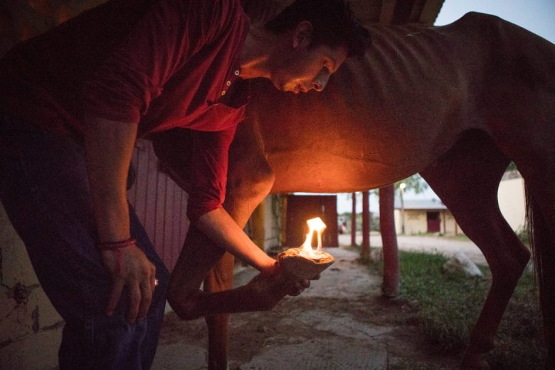 Luis Parra Villanueva sets Bloodbuzz's hooves on fire to rid them of infection.