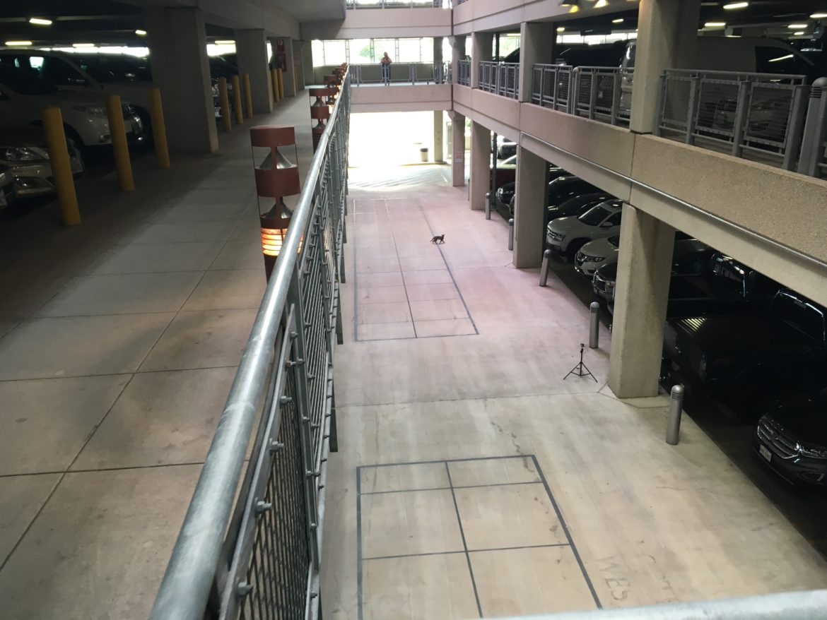 A large cat that appeared to be a lynx (far center) walks through the San Antonio Airport's parking garage during a solstice celebration event.