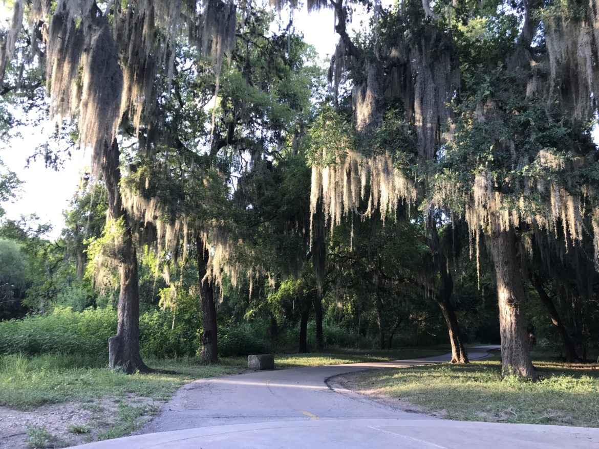 Spanish moss dangles from trees at an intersection along Salado Creek Greenway - South.