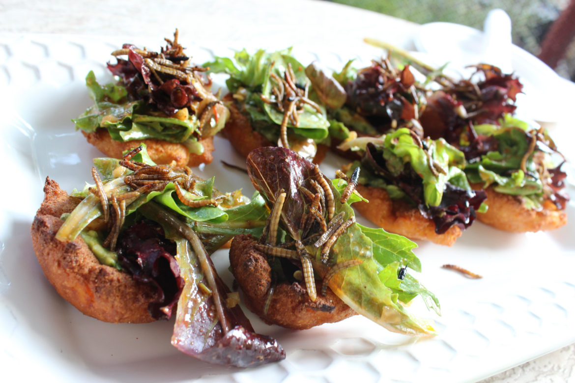Mealworm frittatas by edible insect focused chef Robert Nathan Allen are ready to be eaten.