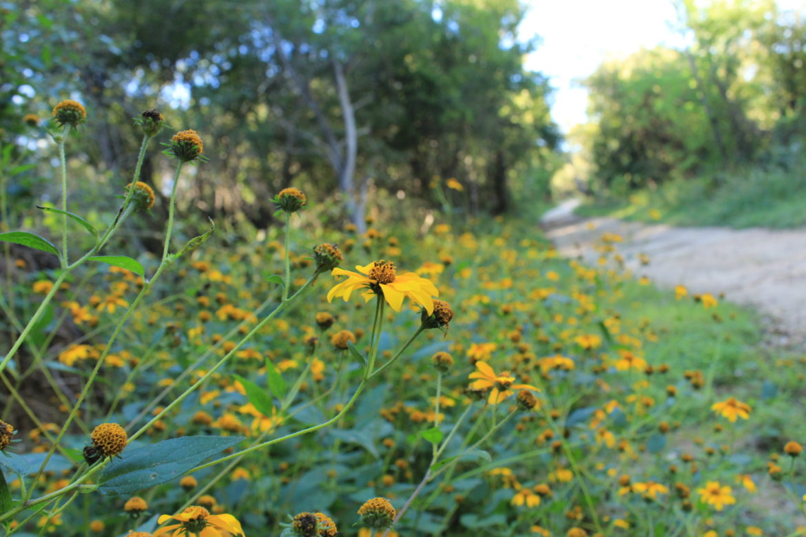 Fall flowers bloom along the Cibolo Creek Primitive Trail.