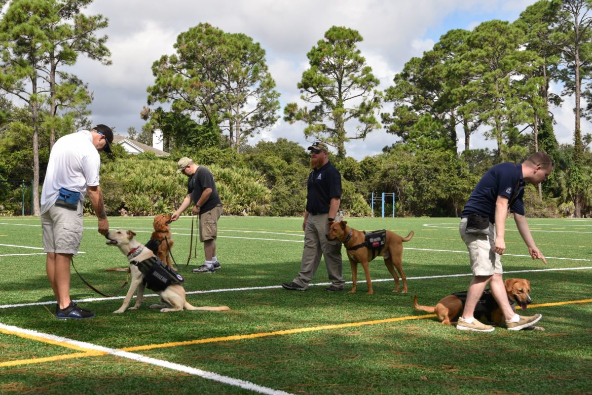 A group of dogs is trained in the K9s for Warriors program, which is coming to San Antonio.