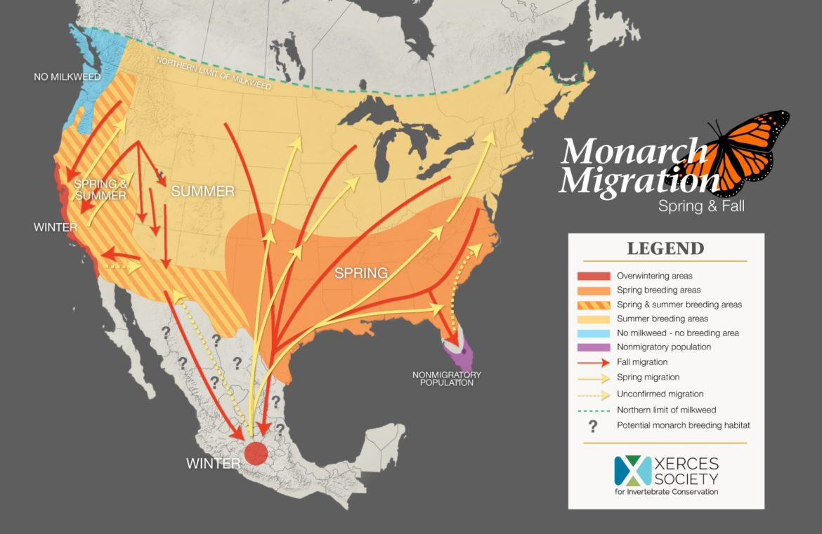 Monarch migration patterns span the majority of North America.