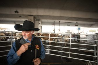 Scott Kimble, one of the owners of Kimble Cattle Company, describes the personalities of the longhorns.