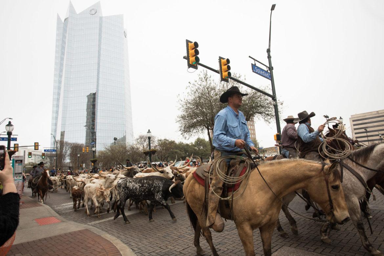 Cowboys drive longhorns through past Frost Tower through downtown San Antonio.