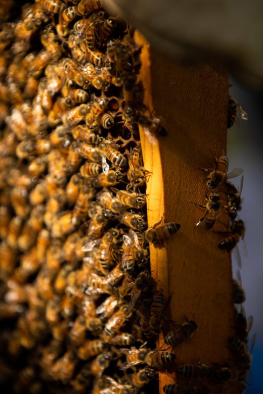 Beekeeping has become a popular backyard hobby for many San Antonio residents.